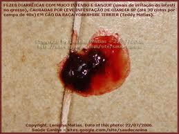 giardia sintomas cao paraziták és gombák gyógyszere