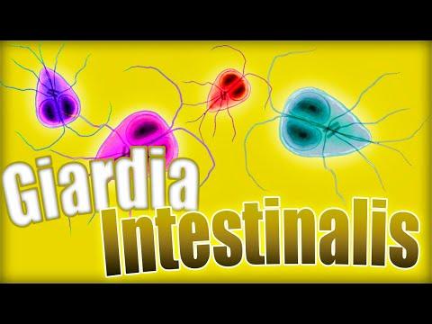 giardiasis kezelés tablettákkal
