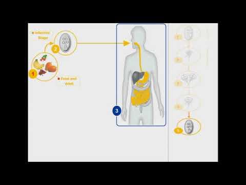 giardiasis tünetek felnőttek fórumainak áttekintése)