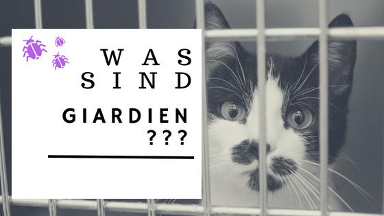 giardien bei katzen homoopathisch behandeln