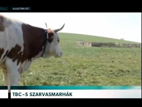 gyógyszerek szarvasmarhák férgekhez)