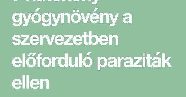 hatekony parazitak elleni gyogyszer)
