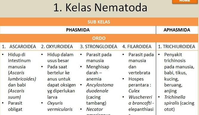 Kelas dari phylum nemathelminthes - Parazitáfertozes tünetei