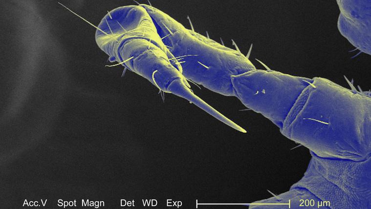 kötél paraziták, mint kezelni férgek gyermekkezelésben