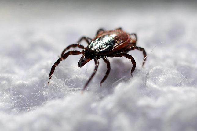 parazita által okozott betegség