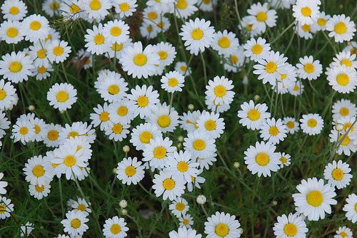 Best gyógynövények sokféle bajra images in | Gyógynövények, Egészség, Fűszernövények