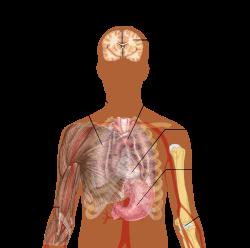 paraziták a test tünetei felnőtteknél