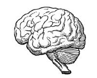 Parazita az agyban: erősebb, mint hitték