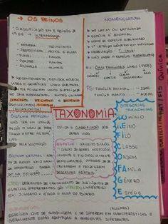 strongyloidosis spirál)