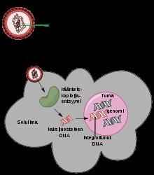 A férgek megelőzése a kerekféreg gyermekeiben Gyermekekben a helminták megelőzése