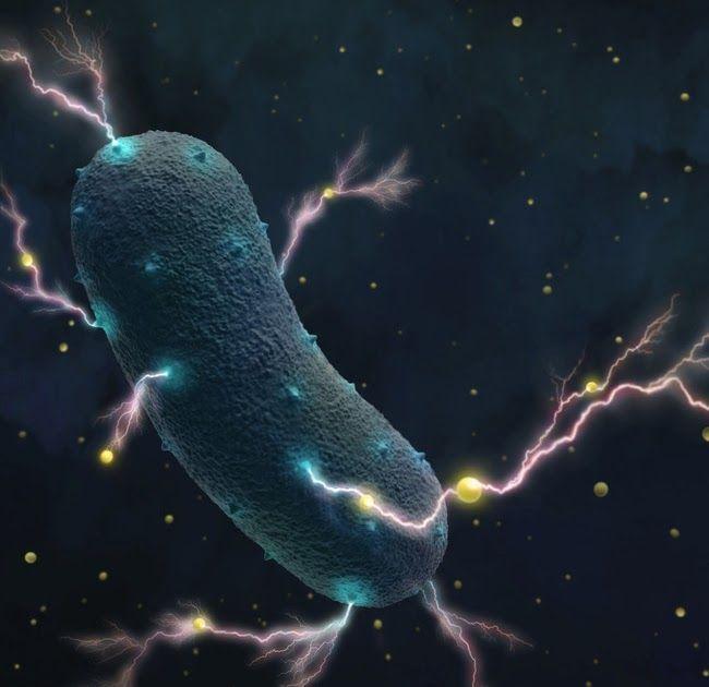 nagy tabletta a paraziták számára férgek gyógyszeres megelőzése